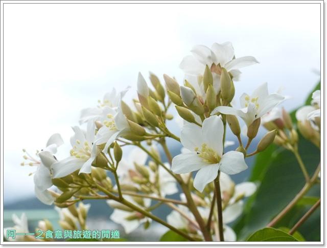 花蓮吉安中園桐花步道鬱金香花園image021