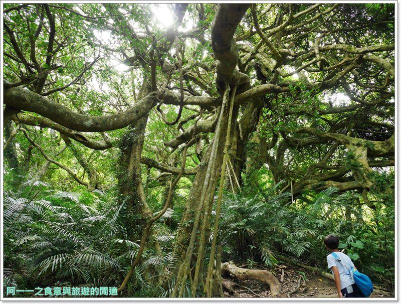 鸞山森林博物館.台東景點.祕境.會走路的樹.阿凡達image002