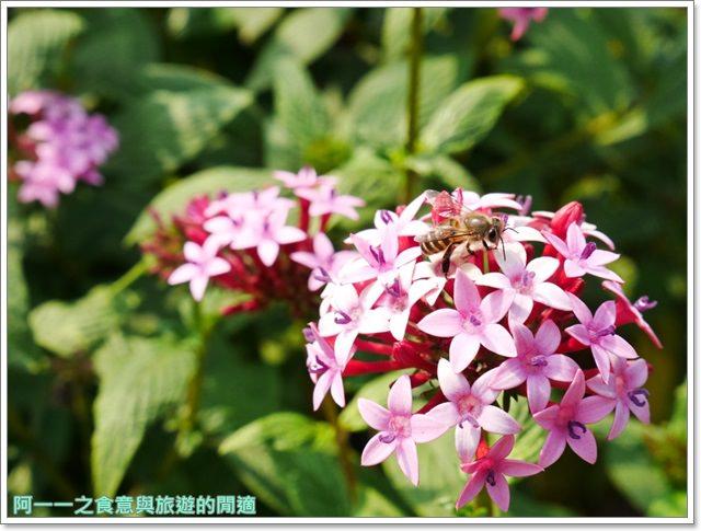 捷運中正紀念堂景點櫻花海綿寶寶暢遊比奇堡特展image078