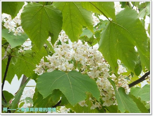 花蓮吉安中園桐花步道鬱金香花園image013