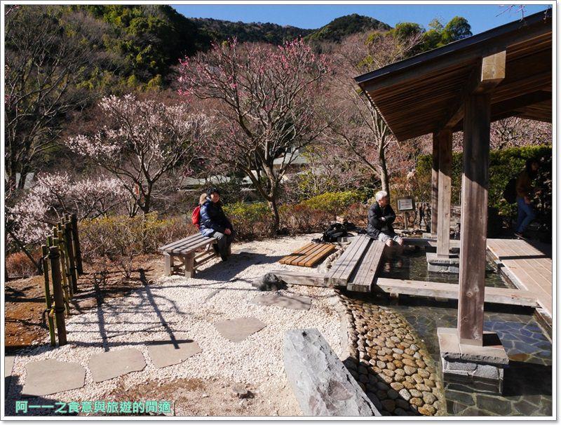 靜岡旅遊.熱海梅園.來宮站.賞花.梅花image065