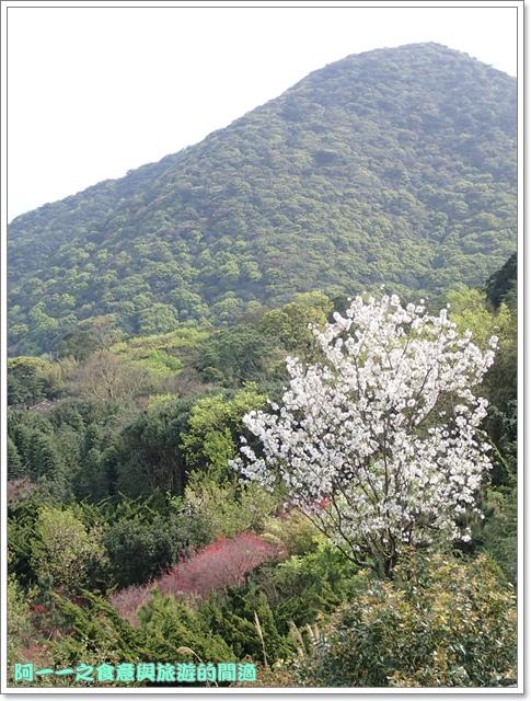 陽明山竹子湖海芋大屯自然公園櫻花杜鵑image005