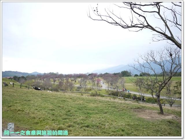 image043初鹿牧場櫻花