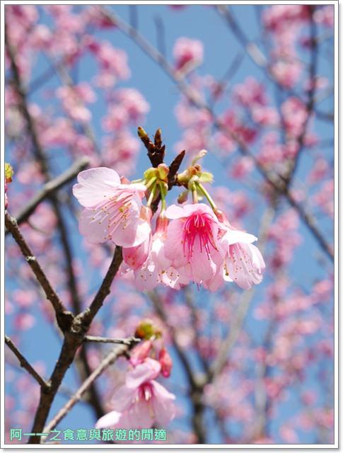 台東美食景點初鹿牧場初鹿鮮乳鮮奶櫻花祭放山雞伴手禮image028