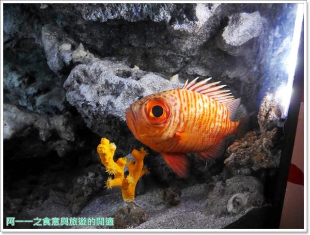 沖繩美麗海水族館.海洋博紀念公園.海豚秀.親子旅遊image059