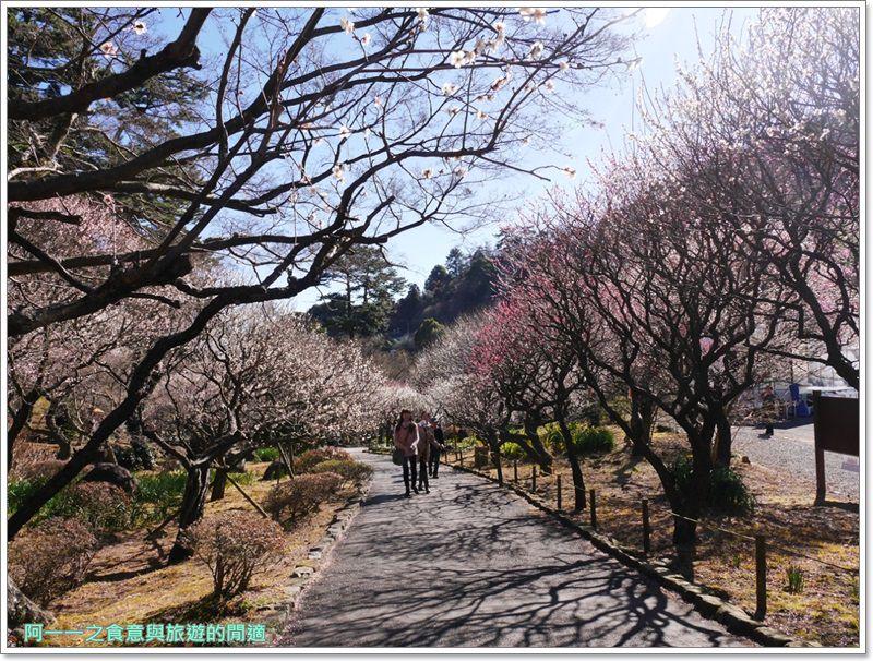 靜岡旅遊.熱海梅園.來宮站.賞花.梅花image020