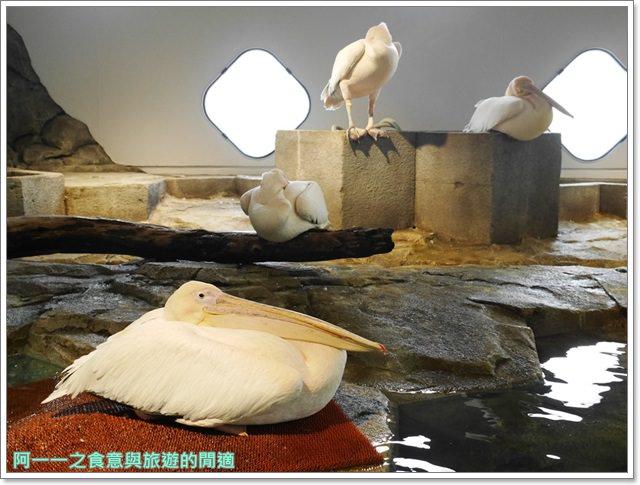 大阪旅遊.expocity.nifrel.海遊館.親子.動物園image052