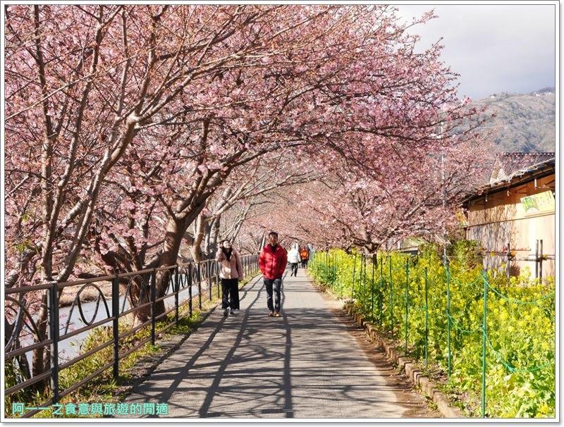 河津櫻.靜岡伊豆.日本自助旅遊.交通.攻略image044