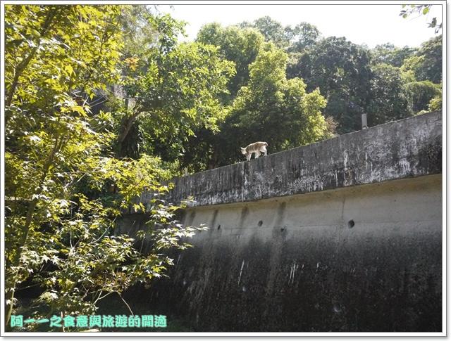苗栗三義旅遊美食勝興車站老吳老鐵馬臭豆腐image165