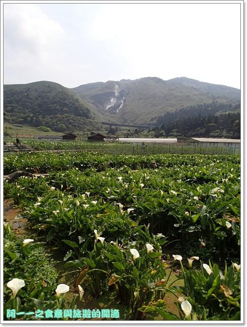 陽明山竹子湖海芋大屯自然公園櫻花杜鵑image089