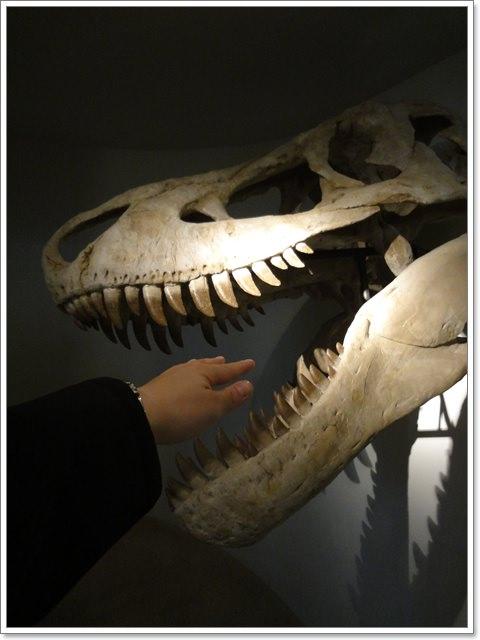 國立台灣博物館 土銀分館(下)~來看小朋友最愛的恐龍化石