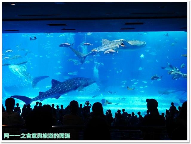 沖繩美麗海水族館.海洋博紀念公園.海豚秀.親子旅遊image039