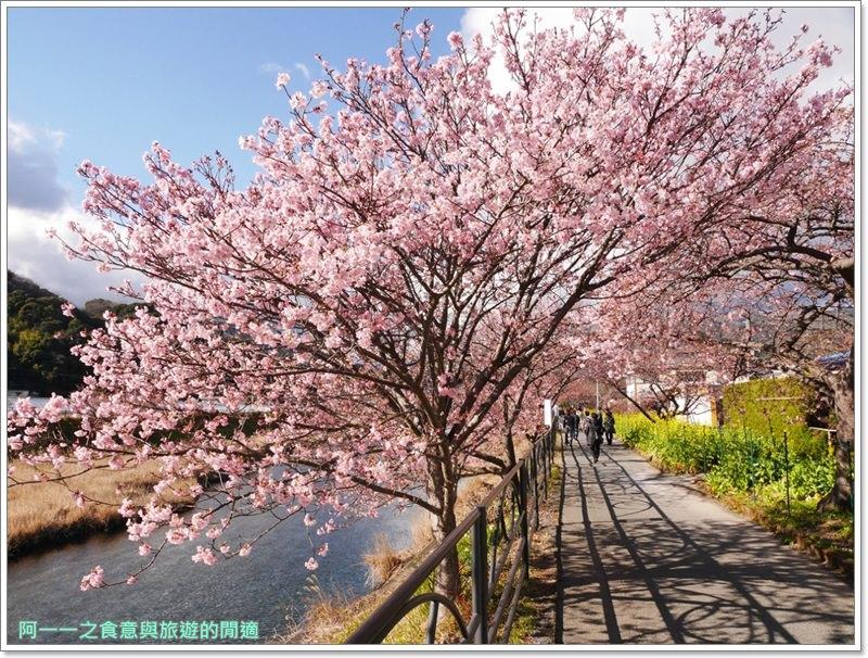 河津櫻.靜岡伊豆.日本自助旅遊.交通.攻略image042