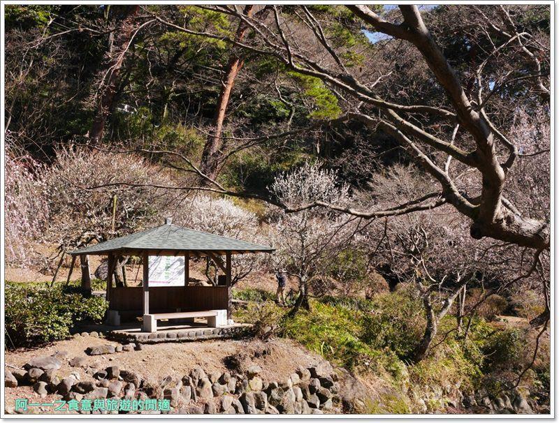 靜岡旅遊.熱海梅園.來宮站.賞花.梅花image025