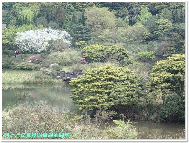 陽明山竹子湖海芋大屯自然公園櫻花杜鵑image025