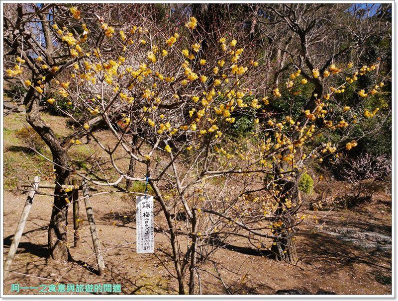 靜岡旅遊.熱海梅園.來宮站.賞花.梅花image033