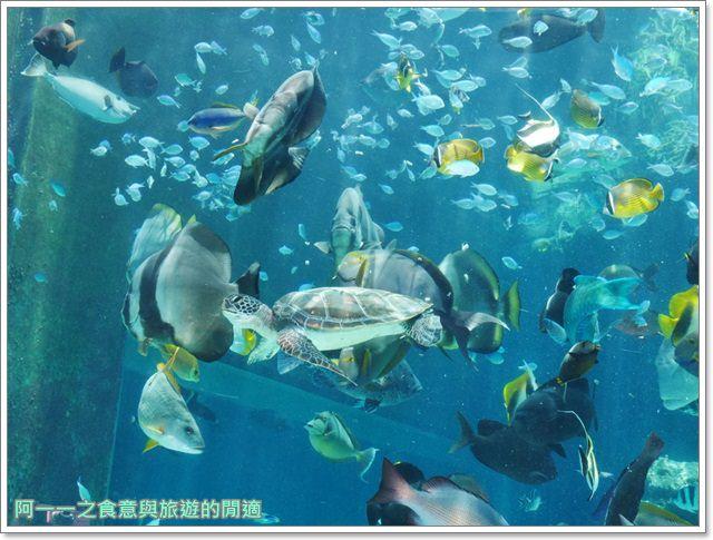 沖繩美麗海水族館.海洋博紀念公園.海豚秀.親子旅遊image029