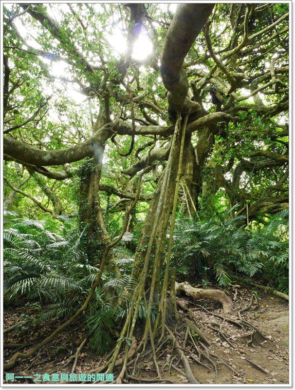 鸞山森林博物館.台東景點.祕境.會走路的樹.阿凡達image015