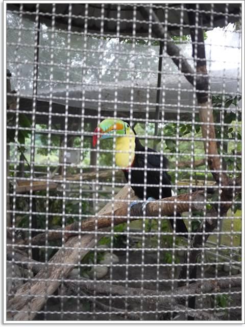 台南柳營 南元花園休閒農場 超口愛大嘴鳥~阿一一台南高雄小吃之旅