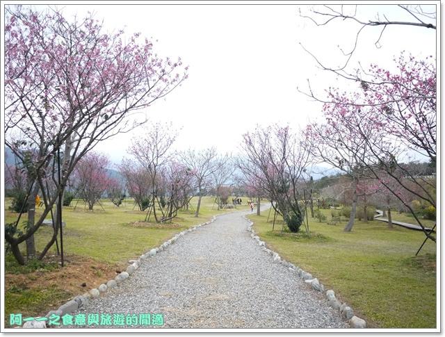 image067初鹿牧場櫻花