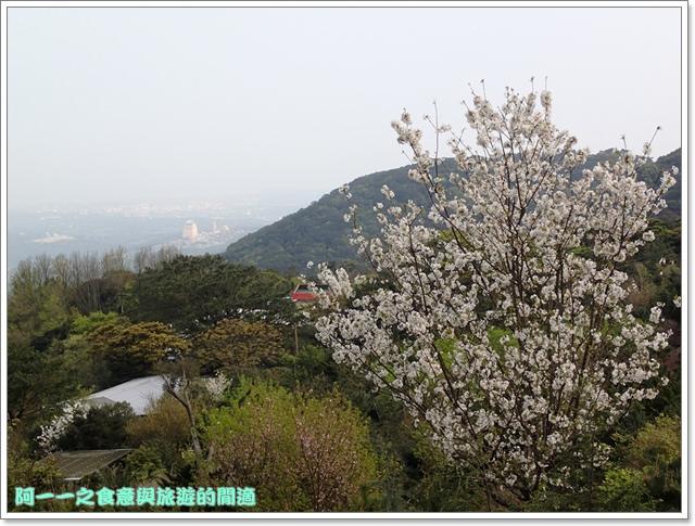 陽明山竹子湖海芋大屯自然公園櫻花杜鵑image003