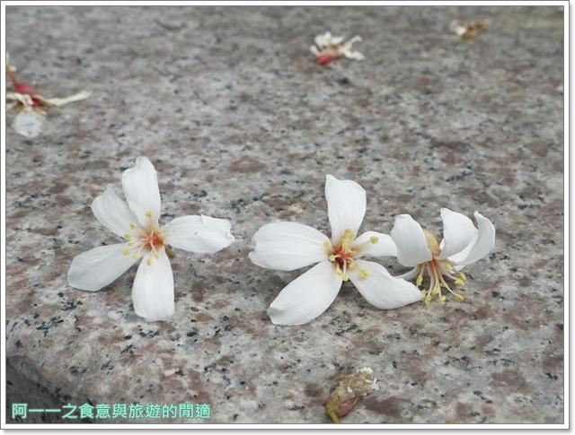 花蓮吉安中園桐花步道鬱金香花園image015