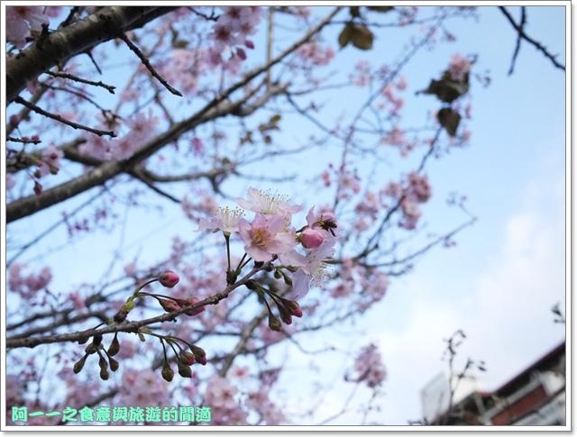 image071桃園客家文化館櫻花