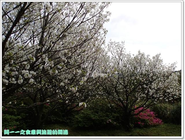 陽明山竹子湖海芋大屯自然公園櫻花杜鵑image043