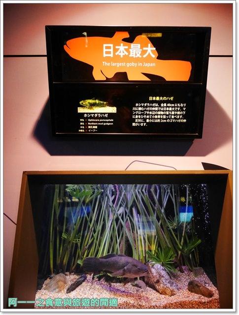 沖繩美麗海水族館.海洋博紀念公園.海豚秀.親子旅遊image034