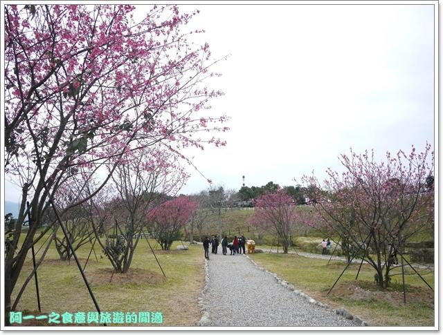image047初鹿牧場櫻花