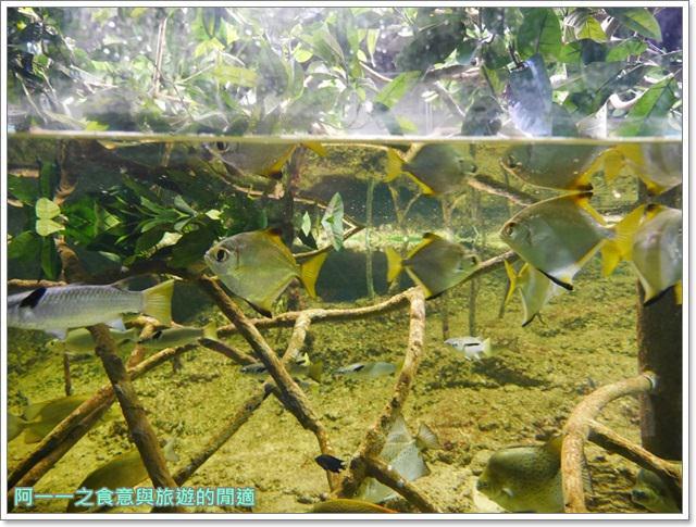 沖繩美麗海水族館.海洋博紀念公園.海豚秀.親子旅遊image032