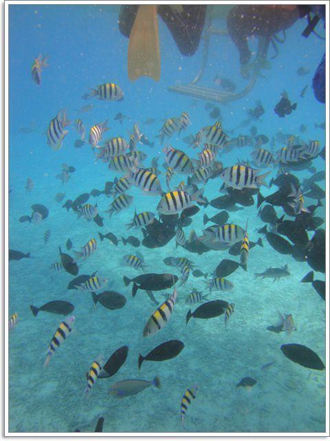 帛琉 餵魚區 眾星拱月的尊貴享受~阿一一帛琉藍色海洋之旅