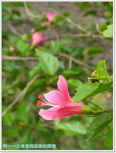 花蓮吉安中園桐花步道鬱金香花園image029
