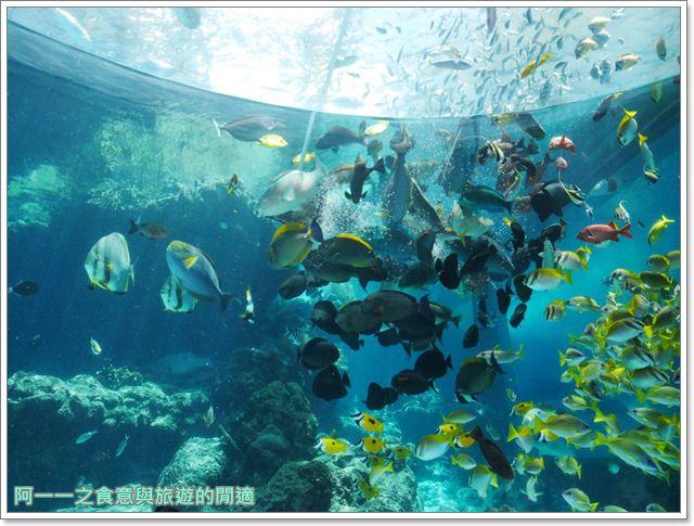 沖繩美麗海水族館.海洋博紀念公園.海豚秀.親子旅遊image027