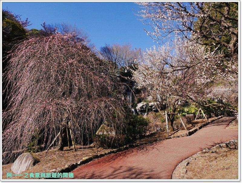 靜岡旅遊.熱海梅園.來宮站.賞花.梅花image023