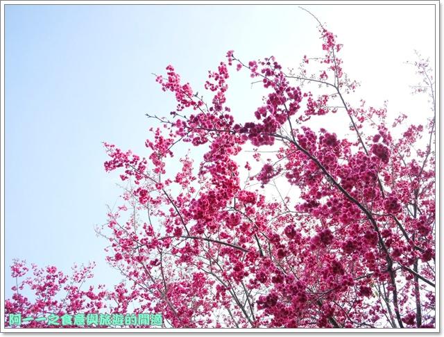 image081桃園客家文化館櫻花