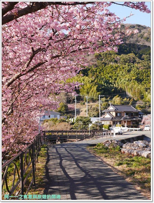 河津櫻.靜岡伊豆.日本自助旅遊.交通.攻略image068