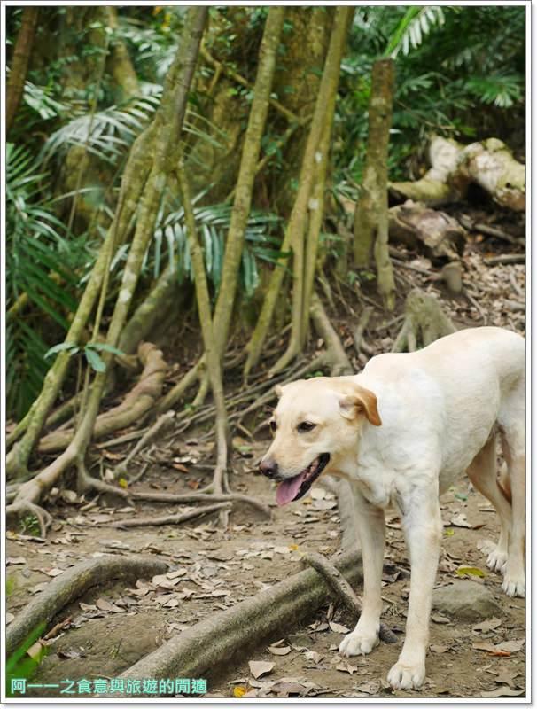 鸞山森林博物館.台東景點.祕境.會走路的樹.阿凡達image010