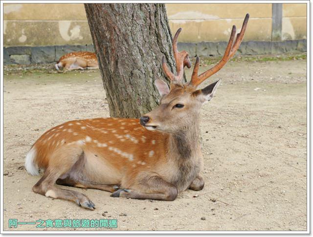 奈良.斑鳩一日卷.鹿.猿澤池.興福寺.五重塔image025