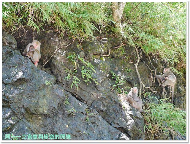 台東旅遊.泰源幽谷.登仙橋.台灣獼猴.東河橋.東部海岸image033