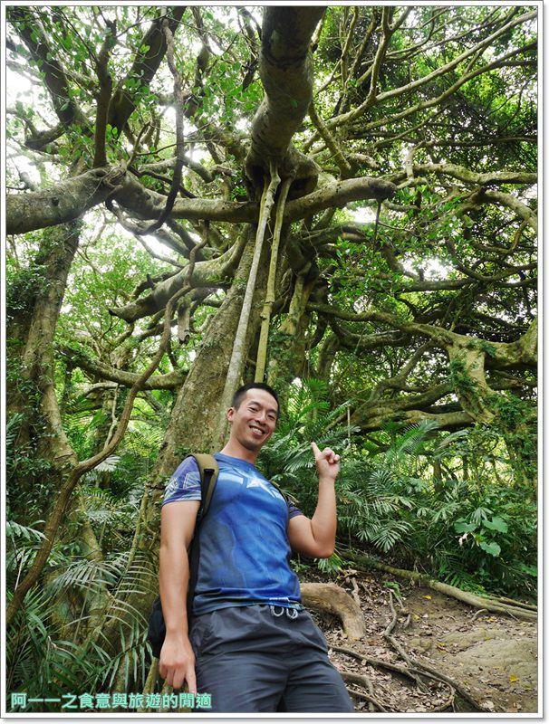 鸞山森林博物館.台東景點.祕境.會走路的樹.阿凡達image017