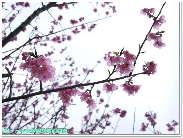 image063初鹿牧場櫻花