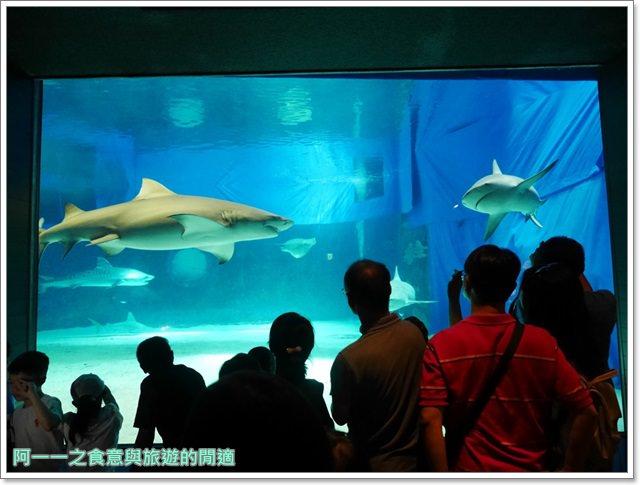 沖繩美麗海水族館.海洋博紀念公園.海豚秀.親子旅遊image045