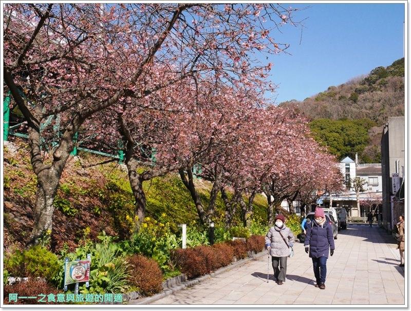 河津櫻.靜岡伊豆.日本自助旅遊.交通.攻略image013