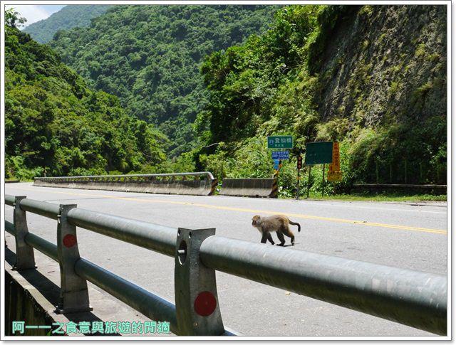 台東旅遊.泰源幽谷.登仙橋.台灣獼猴.東河橋.東部海岸image016