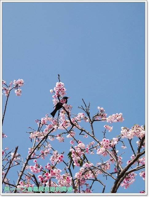 台東美食景點初鹿牧場初鹿鮮乳鮮奶櫻花祭放山雞伴手禮image035