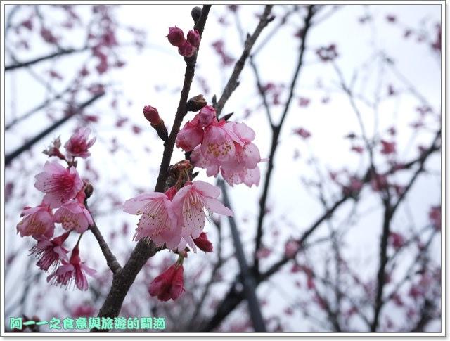 image083初鹿牧場櫻花