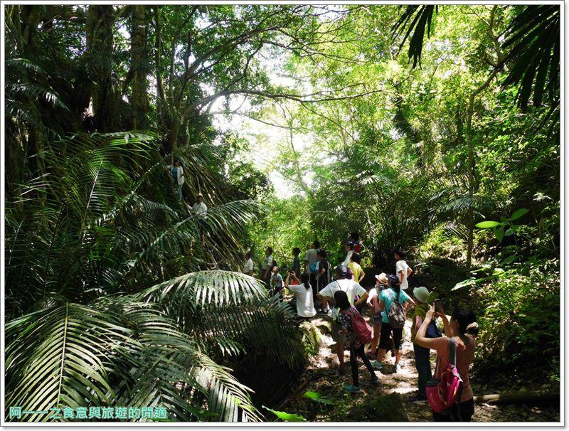 鸞山森林博物館.台東景點.祕境.會走路的樹.阿凡達image040