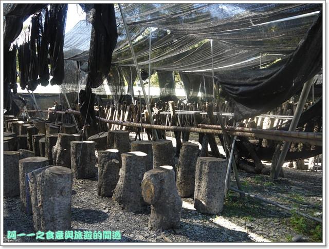 南投武界段木香菇一線天image015