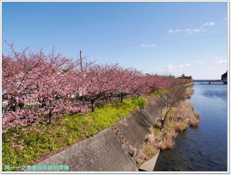河津櫻.靜岡伊豆.日本自助旅遊.交通.攻略image018